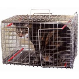 شركة مكافحة القطط بالدمام
