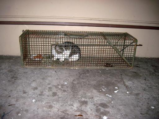 شركة مكافحة القطط بالدمام 0557366135